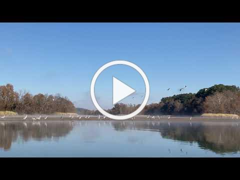 Outdooer Chattanooga | Sandhill Cranes Flying at the Hiwassee Wildlife Refuge