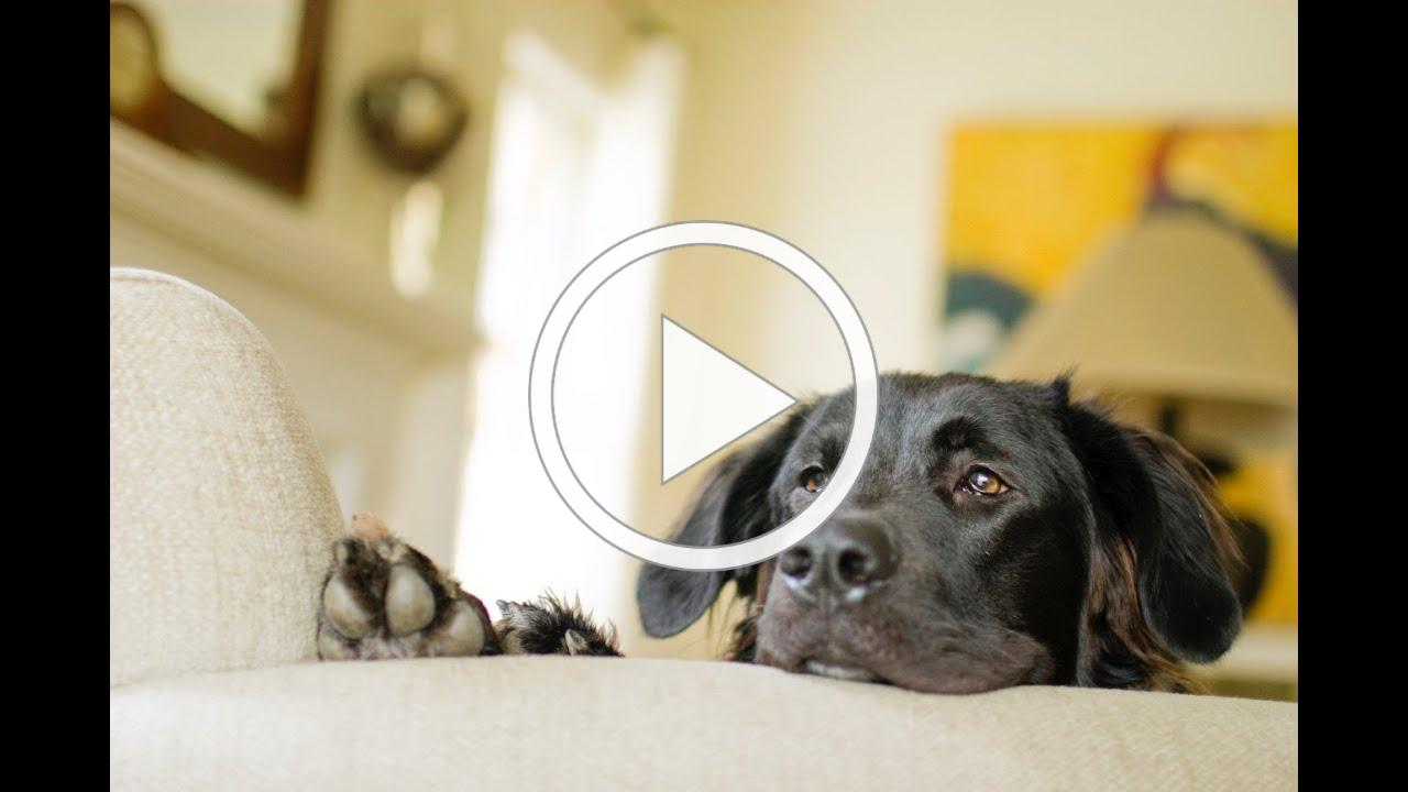Window to the Law: Fair Housing Assistance Animal Guidance