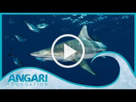 Generation Ocean: Sharks   Trailer