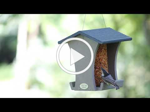 WBU Nature Centered | Relax & Enjoy the Birds | Bird Feeders