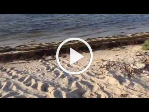 Florida Keys Turtle Nest Excavation & Survey