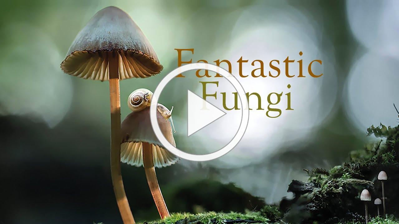 Fantastic Fungi, Official Film Trailer | Moving Art by Louie Schwartzberg