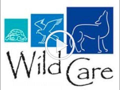 Wild Care In June!