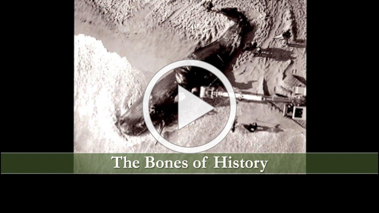 Bones of History, the Sperm Whale that Washed Up on Nantucket Shore