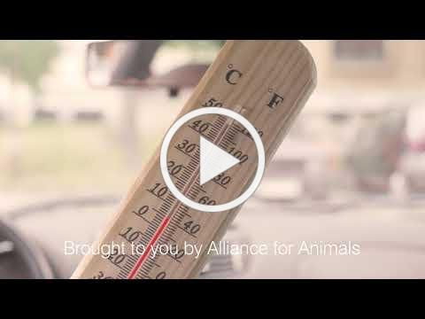 Dogs in Hot Cars - Alliance For Animals PSA 1