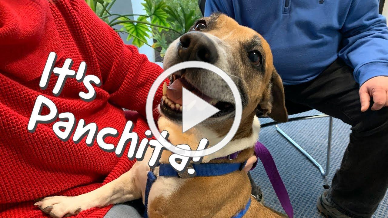 Panchita From New Milford Is a Rescue From Puerto Rico