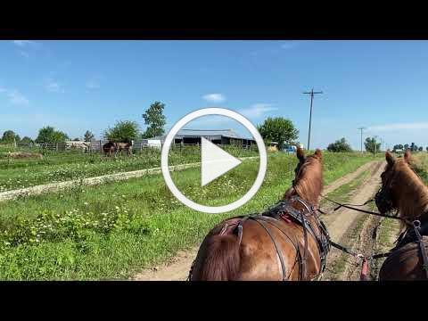 Jim Driving His Horses