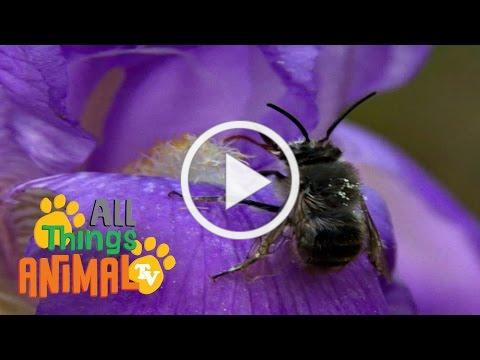 * BEE *   Animals For Kids   All Things Animal TV
