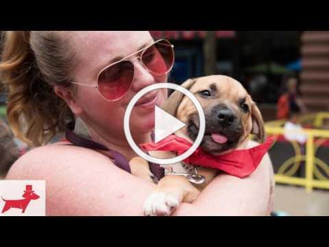 2016 Beltway Barks 4 promo video