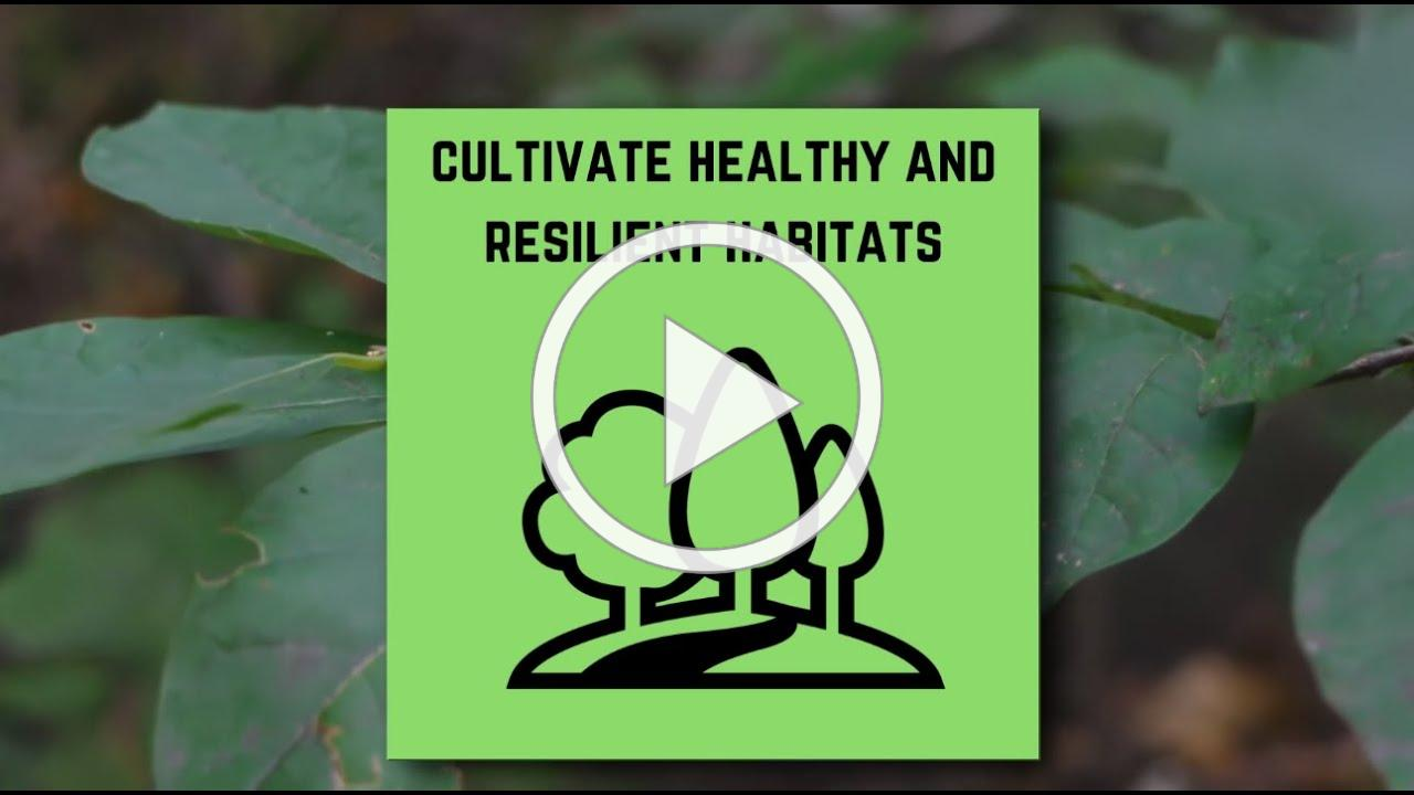 Cultivate Healthy and Resilient Habitats