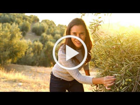 OLIVE OIL | How is it Made? (OLIVE: How Does it Grow?)