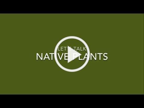 Let's talk native plants