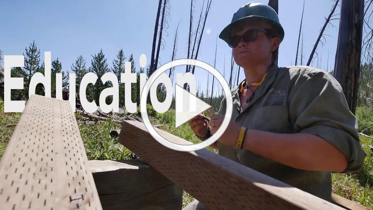 Be a Conservation Leader with Northwest Youth Corps!