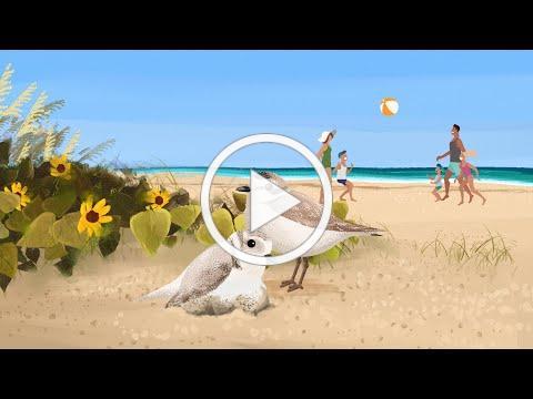 City Of Sanibel Shorebirds Conservation