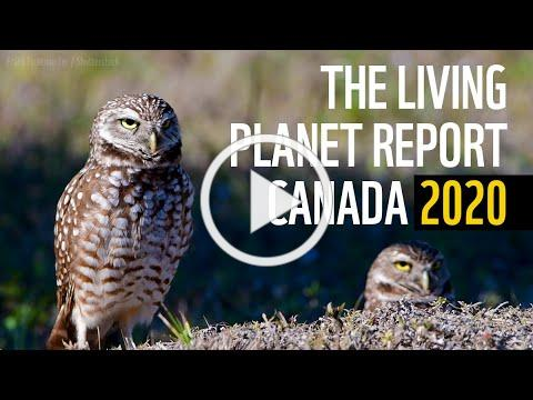 The Living Planet Report Canada