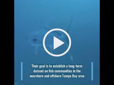 Chris Stallings Lab Reef Surveys