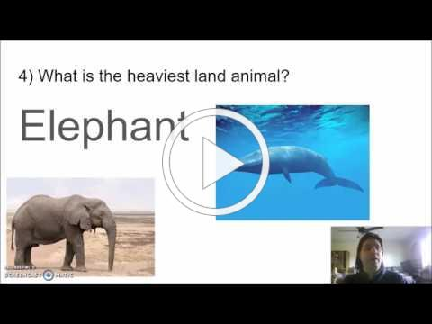 Trivia Tuesday: Animals Aren't Trivial