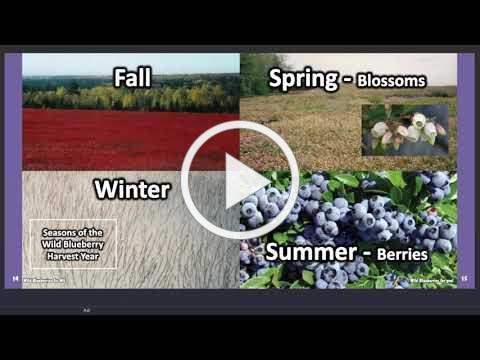 Wild Blueberries for ME Online Reading