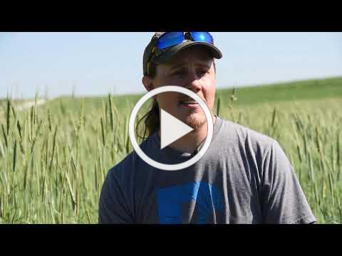 Field Day Sneak Peek: Cover Crops With Purpose - Sam Bennett