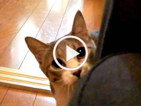 だるまさんが転んにゃ - Stalking Cat -