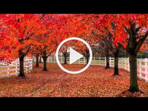Autumn Colors (HD1080p)