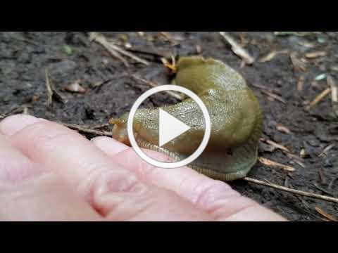 Banana Slug Olympic National Park Kaiyote Tours