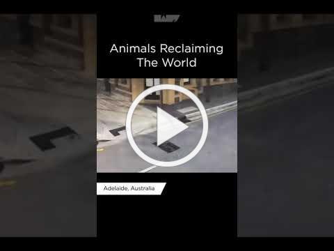 Animals Reclaiming the world