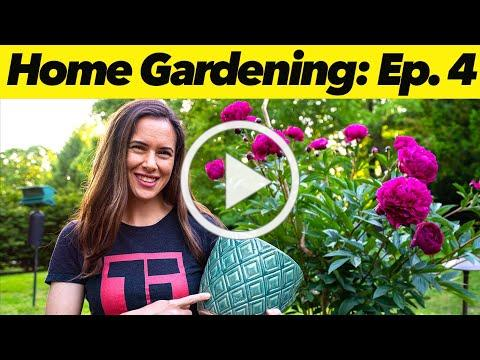 Container Growing for Small Spaces   Home Gardening: Ep. 4