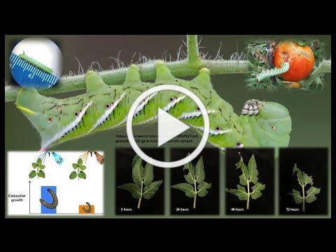 FAU 3MT® Competitor: Nicholas Nifakos (Biological Sciences)