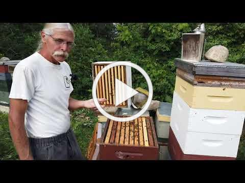 Beekeeping in the Adirondacks | Adirondack Harvest