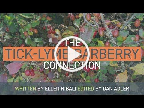 The Tick - Lyme - Barberry Connection