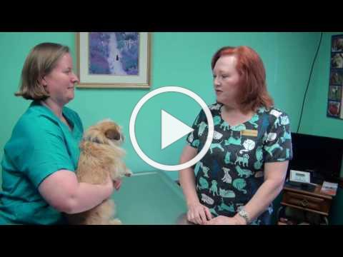 AVAC Rabies Vaccination