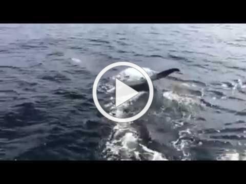 Christas whale video
