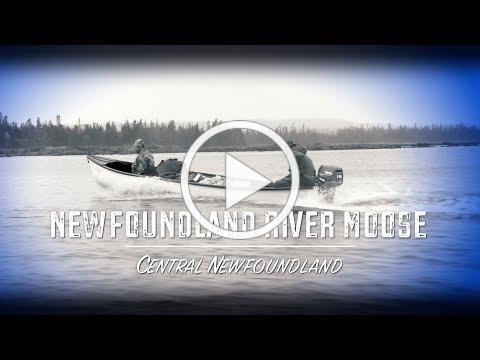 Newfoundland River Moose (Teaser)
