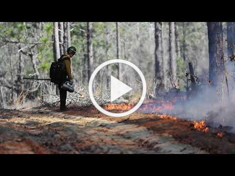 Fire in the forest: Longleaf on the short vol. 4