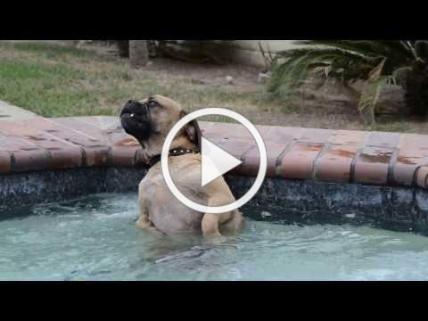Dog LOOOOVES the hot tub