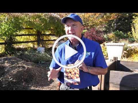 Planting Onions, Garlic and Shallots