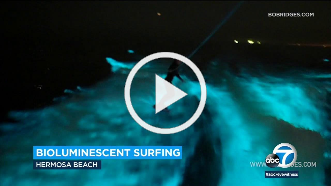AMAZING! Surfers ride glowing bioluminescent waves in Hermosa Beach | ABC7