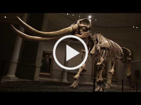 Installing Peale's Mastodon at SAAM - Time-lapse