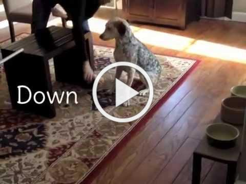 Indoor Dog Obstacle Course