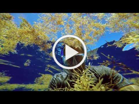 The Smog of the Sea (Trailer)