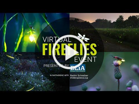 Virtual Fireflies Event presented by Discover Life in America