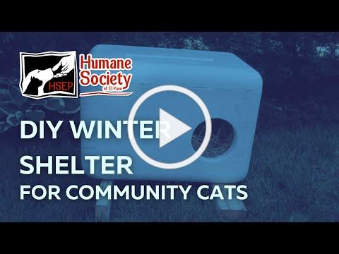 Winter Shelter for Community Cats