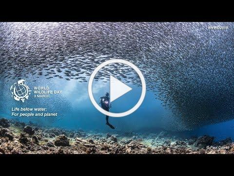 World Wildlife Day 2019 - Life below water: for people and planet