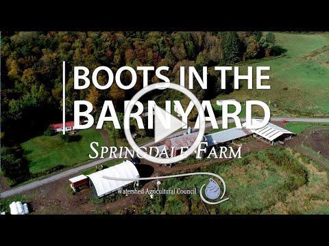 Boots in the Barnyard: Springdale Farm