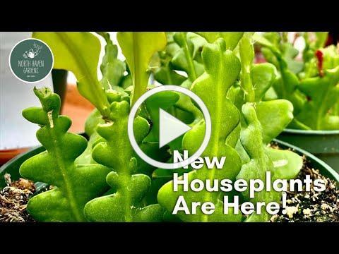 New Tropical Greenhouse Goodies (June 2021)