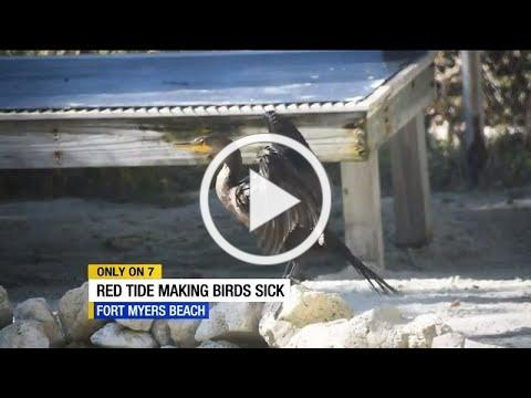 36 sick birds treated at CROW wildlife hospital in November