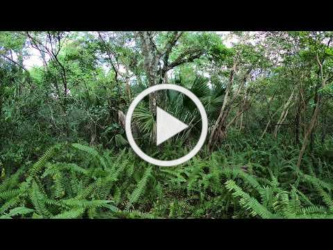 Enter a Hardwood Hammock with this 360 VR View!