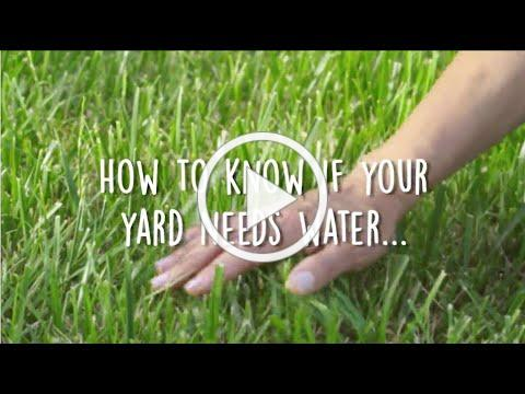 How to Know if Your Landscape Needs Water