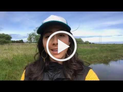 Exploring a Coastal Wetland at Freshwater Farms Reserve